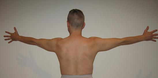 Homo Quadratus  Backbone and Wingspan Herald Author