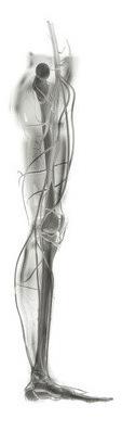 Hip joint ball and socket - proper heel alignment - heel shaped like a ball - high heel posture