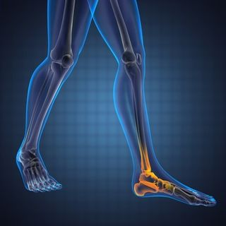 Healthy ankle joints - helping create elastic knee movements