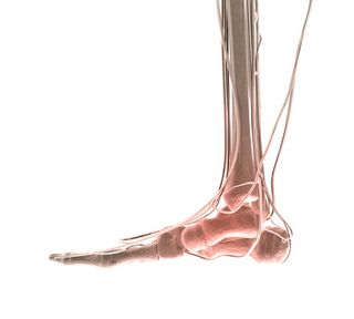 Perceiving the heel as substantial and within an oppositional relationship to the ankle joint