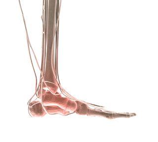 Heel ball - bones of foot - foot balance
