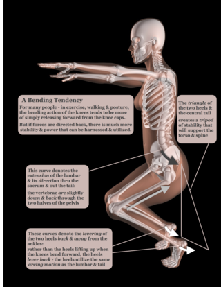 Deep knee bending movement - heel levering - Female Skeleton in Yoga Position © Kirsty Pargeter - Fotolia.com
