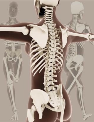 Pelvic skeleton - femur to hip - lumbar extension - medical skeletons © Kirsty Pargeter - Fotolia.com - High Heel Healing - E-Book by Herald