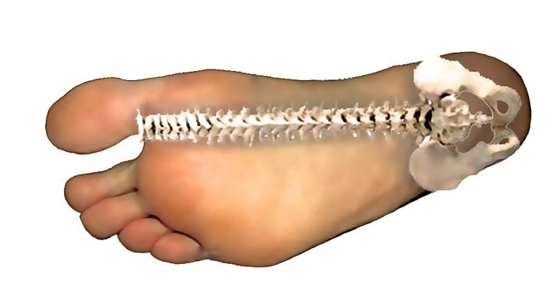 Foot health - spinal alignment - feet flexibility - lumbar curve